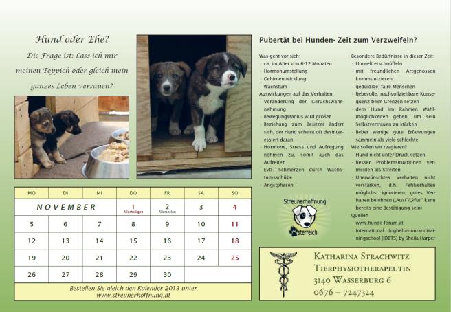 Streunerkalender 2012